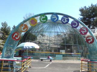 2009桜10.jpg