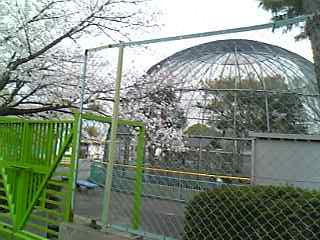 さくら公園動物園.jpg