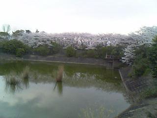 さくら公園1.jpg