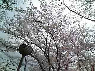 さくら公園10.jpg
