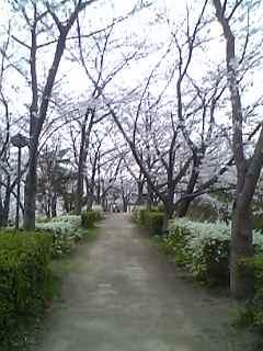 さくら公園4.jpg