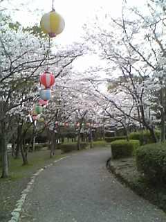 さくら公園6.jpg