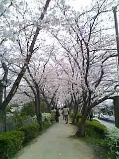さくら公園9.jpg