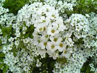 マンションの花1(1).jpg