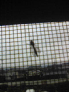 蚊.jpg