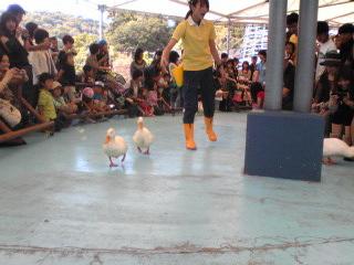 鳥羽水族館アヒル.jpg