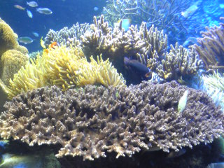 鳥羽水族館サンゴ2.jpg