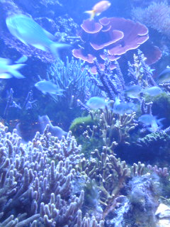 鳥羽水族館サンゴ3.jpg