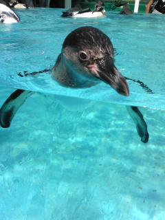 鳥羽水族館ペンギン1.jpg