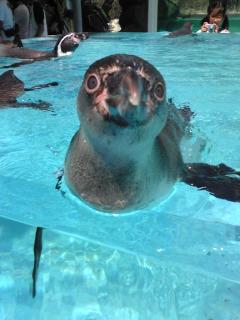 鳥羽水族館ペンギン2.jpg