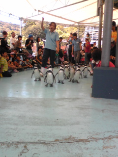 鳥羽水族館ペンギン散歩3.jpg