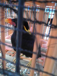 2009桜12.jpg