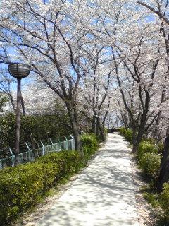 2009桜2.jpg