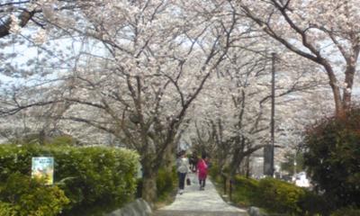 桜101.jpg