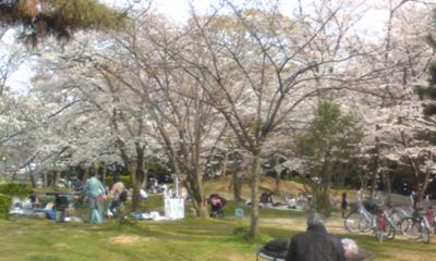 桜1010.jpg