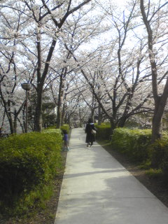 桜1015.jpg