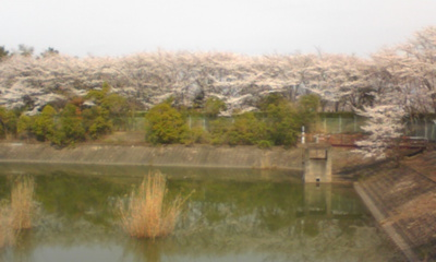 桜1019.jpg
