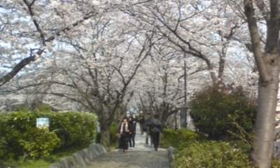 桜102.jpg