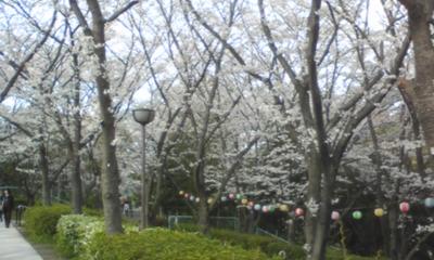 桜105.jpg