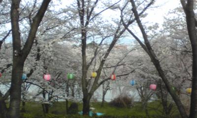 桜106.jpg