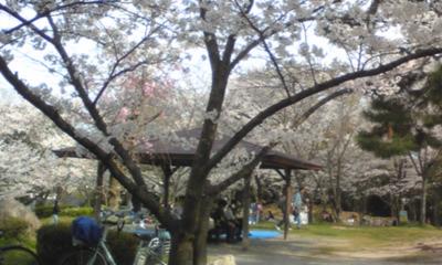 桜109.jpg