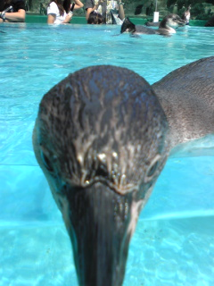 鳥羽水族館ペンギン3.jpg