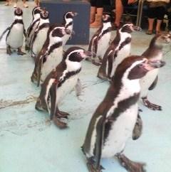 鳥羽水族館ペンギン5.jpg