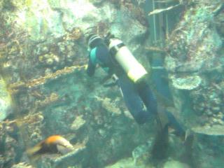 鳥羽水族館魚群2.jpg